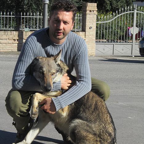 Marco bruciati allevatore cane lupo Cecoslovacco