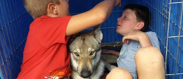 Passione e amore per i propri cani