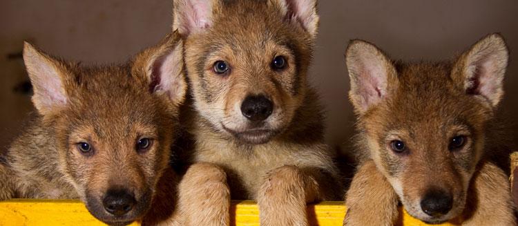 Cuccioli selezionati