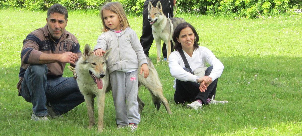 socializzazione del cane lupo Cecoslovacco