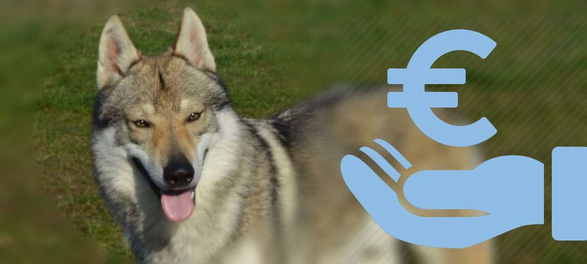 prezzo cane lupo cecoslovacco