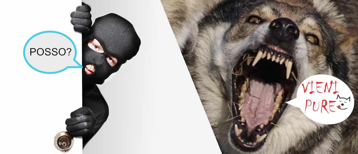 Cane lupo Cecoslovacco da guardia